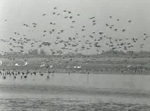 The autumn, the season of the bird migration